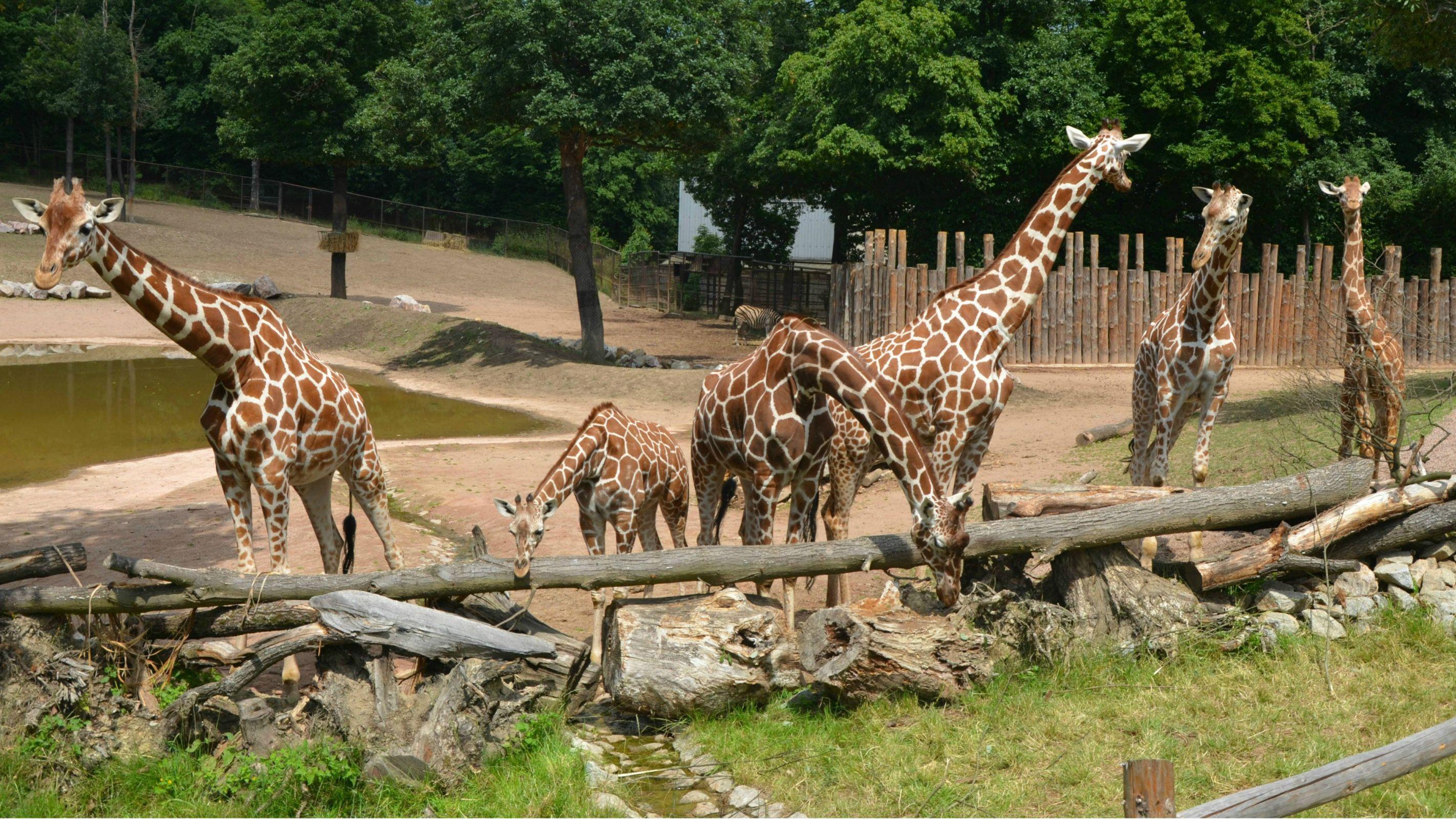 Zoologická zahrada Brno